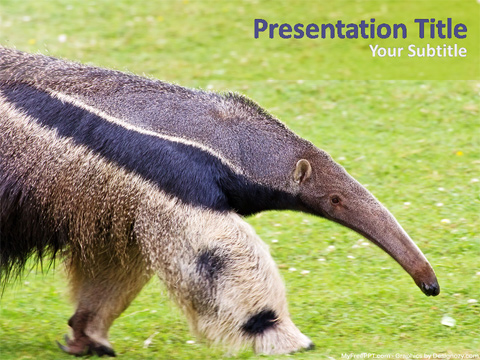 Anteater PowerPoint Template