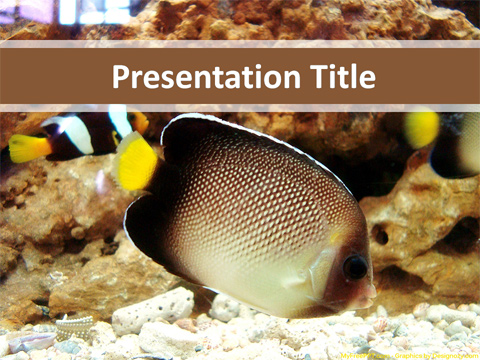 Fish PowerPoint Template