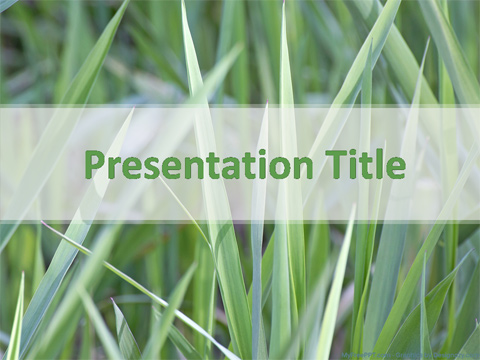 Grasses PowerPoint Template