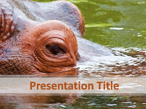 Hippo PowerPoint Template