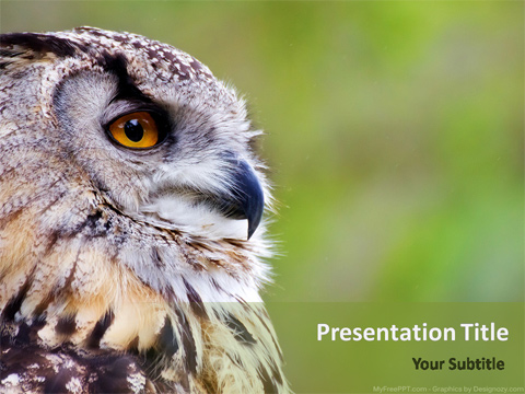 Owl PowerPoint Template