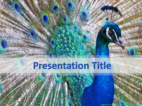 Peacock PowerPoint Template
