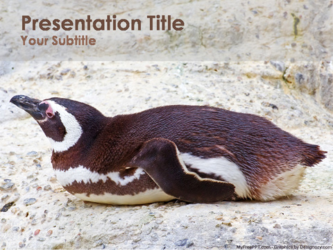Penguin PowerPoint Template
