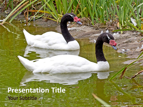 Swan PowerPoint Template