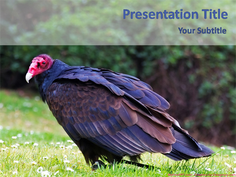 Free Vulture PowerPoint Template