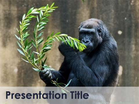 Free Wildlife PowerPoint Template