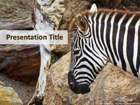 Zebra PowerPoint Template