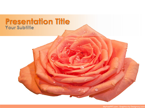 Free Drops on Rose PowerPoint Template