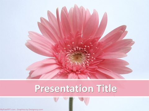 Pink Daisy PowerPoint Template