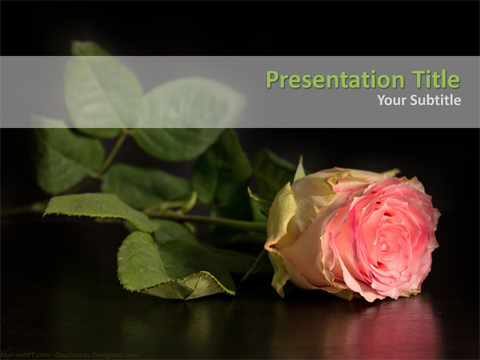 Pink Rose PowerPoint Template
