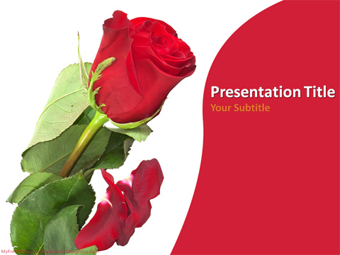 Red Rose PowerPoint Template