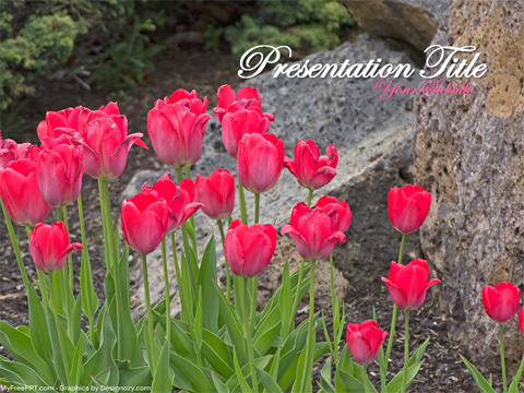 Tulip Flower PowerPoint Template