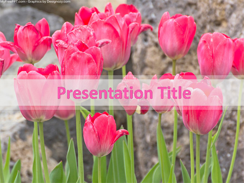 Tulip Flowers PowerPoint Template