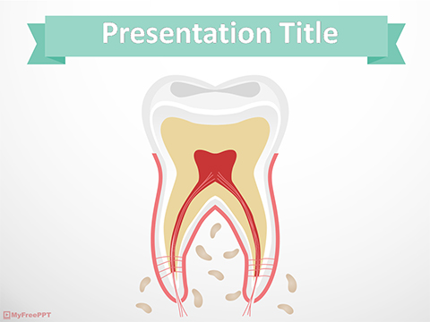 Free Tooth Anatomy PowerPoint Template
