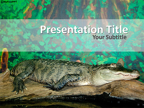 Free Alligator PowerPoint Template
