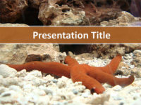 Free Aquarium Starfish PowerPoint Template