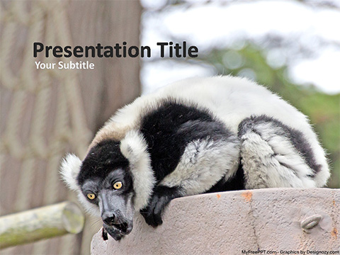 Free Black and White Ruffed Lemur PowerPoint Template