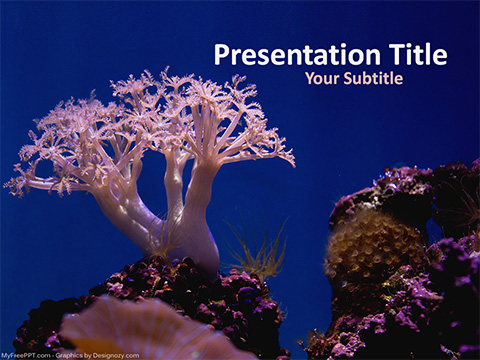 Free Coral PowerPoint Template