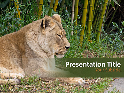 Female Lion PowerPoint Template