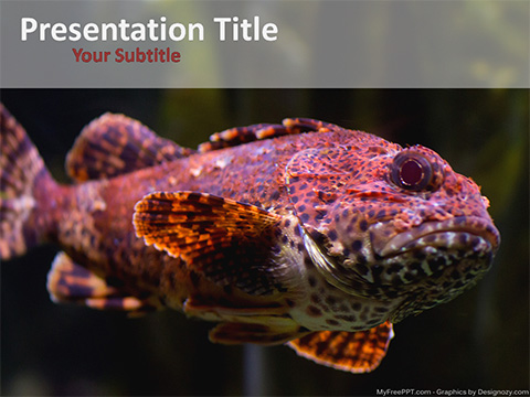 Fish Variety PowerPoint Template