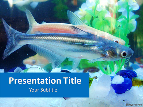Fishes Inside Aquarium PowerPoint Template