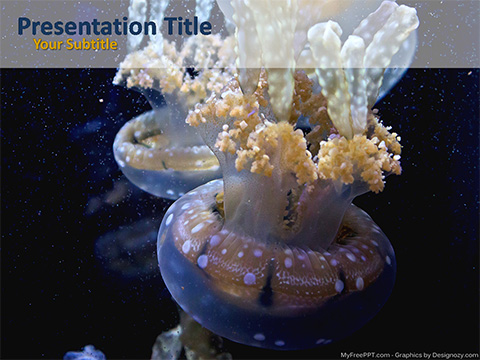 Jelly Fishes PowerPoint Template