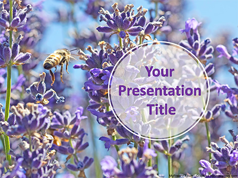 Free Lavender PowerPoint Template