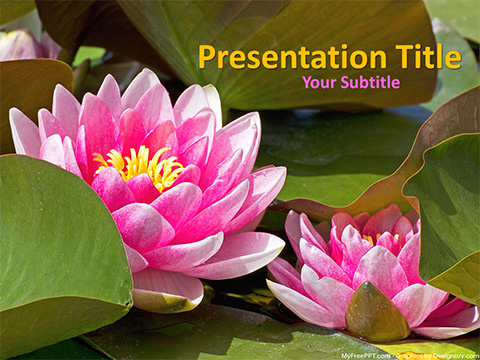 Lotus Flowers PowerPoint Template