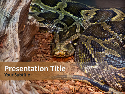 Python PowerPoint Template