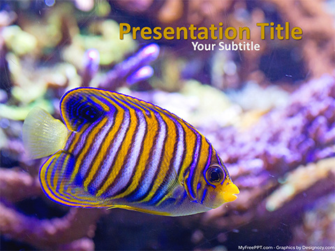 Free Royal Angelfish PowerPoint Template
