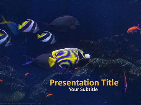 Sea Fishes PowerPoint Template