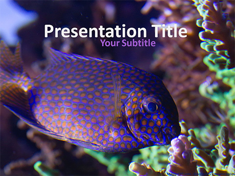 Free Spotted Fish PowerPoint Template