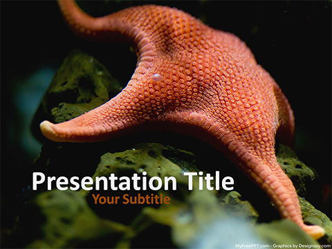 Free Starfish PowerPoint Template
