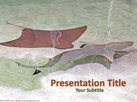 Free Stingray and Shark Fish PowerPoint Template