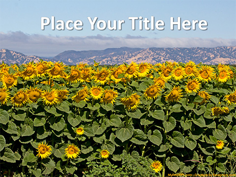 Free Sunflowers PowerPoint Template