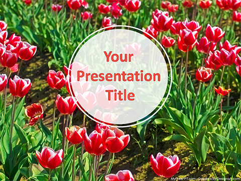 Free Tulip Flowers PowerPoint Template