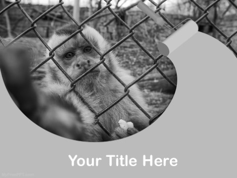 Free Animal Cruelty PPT Template
