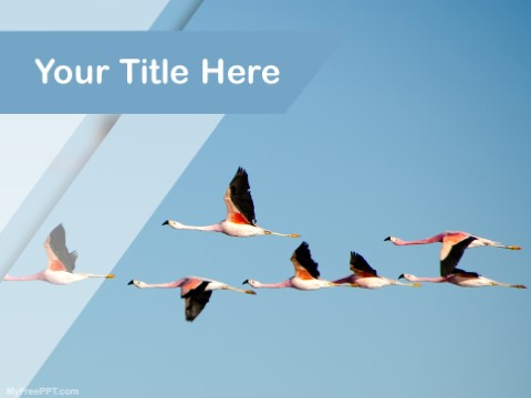 Free Bird Migration PPT Template