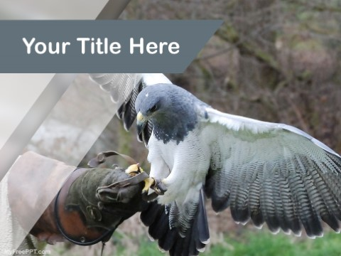 Free Birds As Pet PPT Template