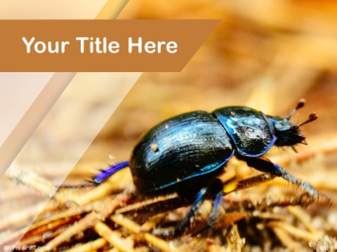Free Bug PPT Template