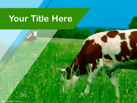 Free Cattle PPT Template