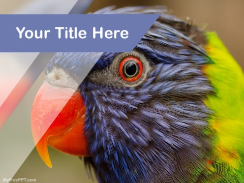 Free Conures PPT Template