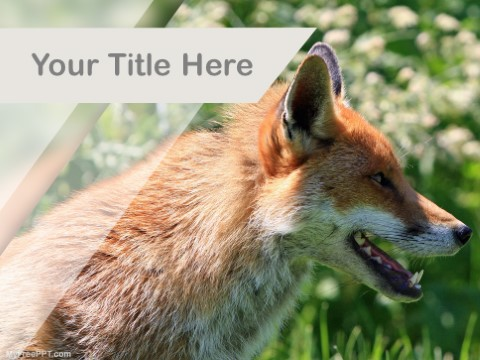 Free Fox PPT Template