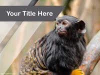Free Red Handed Tamarin PPT Template